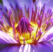 flower-2919284_1920